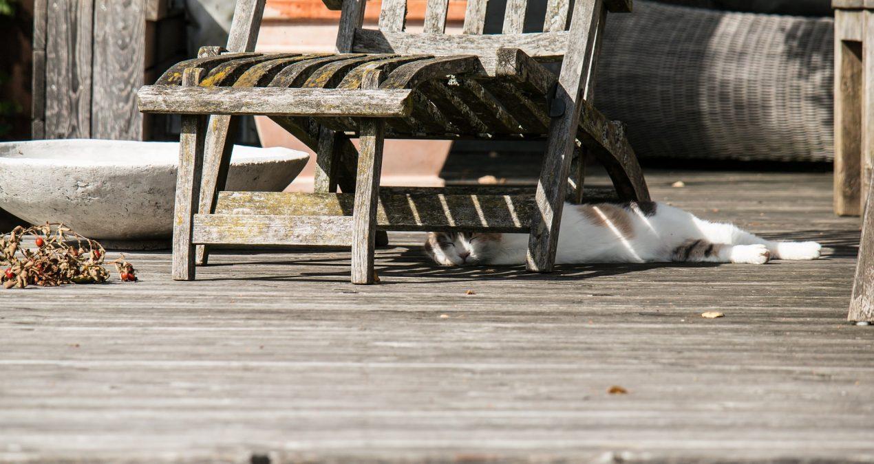 Comment rénover sa terrasse en bois ?